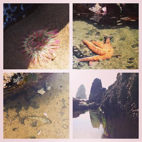 tide pool collage
